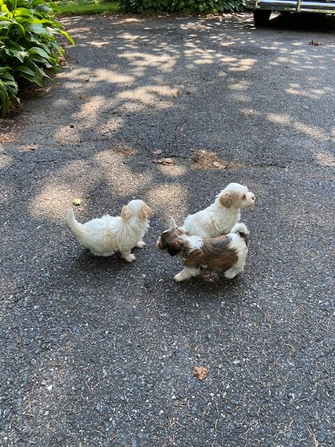 Paris Blake Puppies